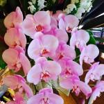 flower-hisayo